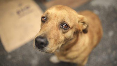 Vlaams Belang wil permanent noodnummer voor dierenmishandeling