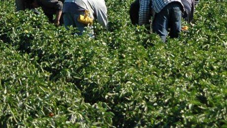 Vlaams Belang verzet zich tegen versoepeling arbeidsregels asielzoekers