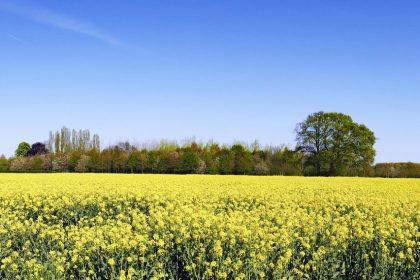 Vlaams Belang wil 'Vlaanderen Vakantieland' terug op de buis