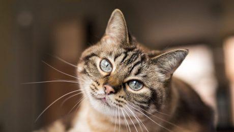 Werelddierendag: Vlaams Belang Brussel ondersteunt kattenopvang met gift