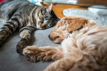 Werelddierendag: Vlaams Belang brengt kruiwagens vol dierenvoeder bij asielen