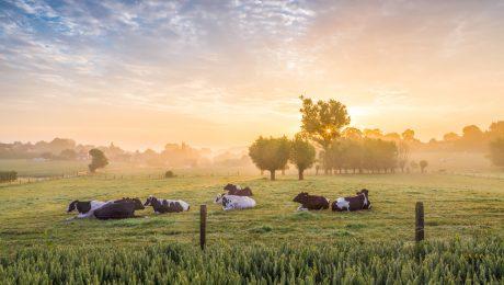 """Vlaams Belang: """"Nieuw Gemeenschappelijk Landbouwbeleid EU slecht voor Vlaanderen"""""""