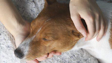 """Vlaams Belang eist strengere straffen voor dierenmishandeling"""