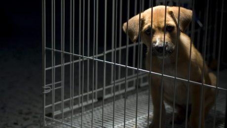 """In 2019 5.580 meldingen van dierenmishandeling: """"Nood aan strengere straffen"""""""