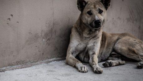 Foto. iStock: Vlaams Belang betreurt dat zijn voorstel om straffen dierenmishandeling op te trekken weggestemd werd
