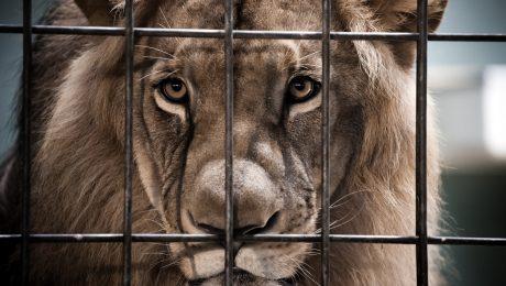 """Dierenparken in financiële moeilijkheden: """"Extra steun nodig voor het welzijn van de dieren"""""""
