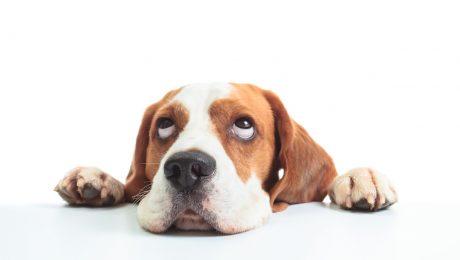 """Dierenwelzijnsfonds: """"Grote achterstand bij inning minnelijke schikkingen"""""""