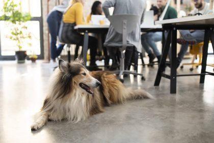 """Veel werkgevers bereid hond toe te laten op werk: """"Verdient aanmoediging"""""""