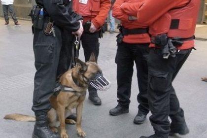 Vlaams Belang eist onmiddellijke actie ter bescherming van Securail-personeel