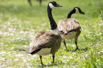 VB kant zich tegen de ruivangst en eist diervriendelijke bestrijdingsmethoden