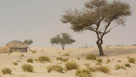 "Klimaatprogramma in Sahel: ""Kitir gooit met belastinggeld"""
